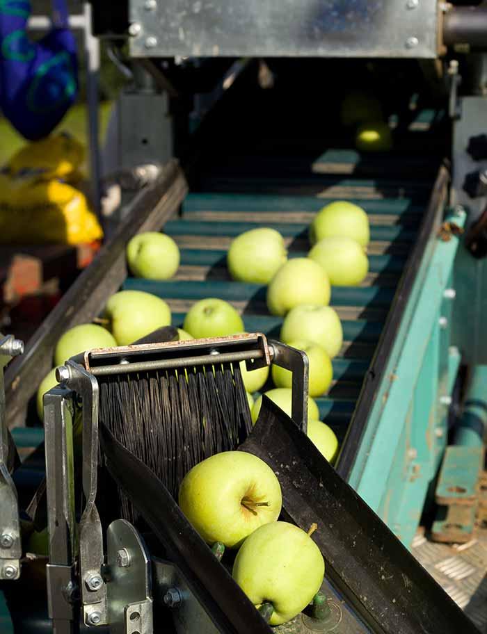 SEDIS industrie agroalimentaire fruits et légumes