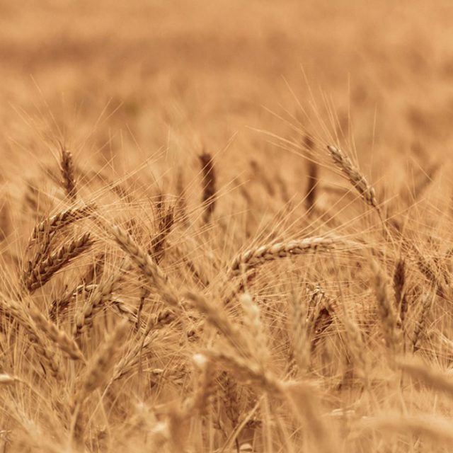 Sedis industrie agroalimentaire céréales